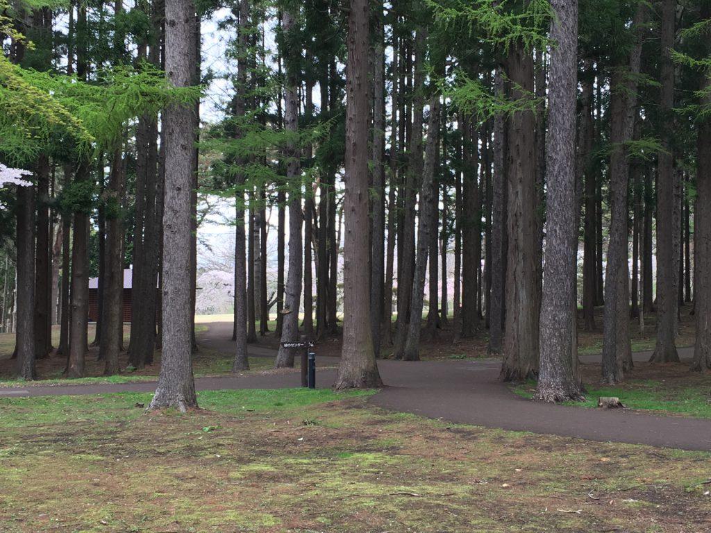 2016年見晴公園の桜-4