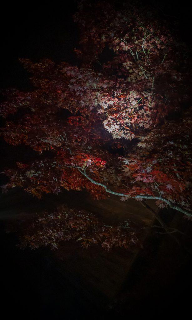 2018-はこだてMOMI-Gフェスタ-04