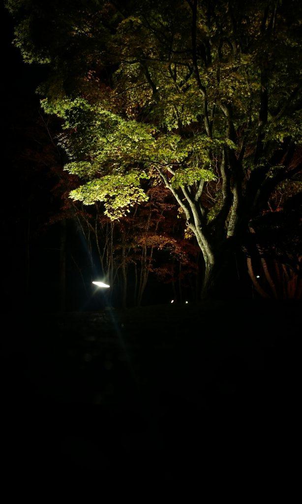 2018-はこだてMOMI-Gフェスタ-11