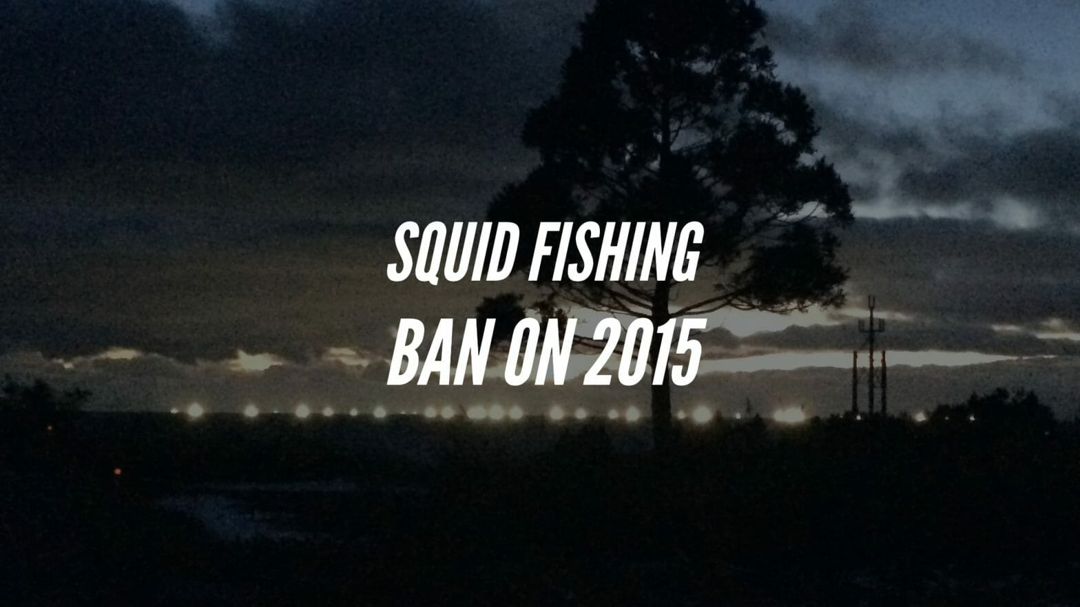 2015年イカ漁解禁